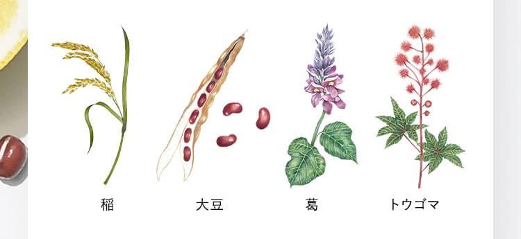 稲 大豆 葛 トウゴマ