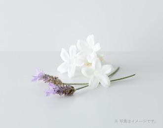 ジャスミンとラベンダーの香り ローション / セラム / クリーム